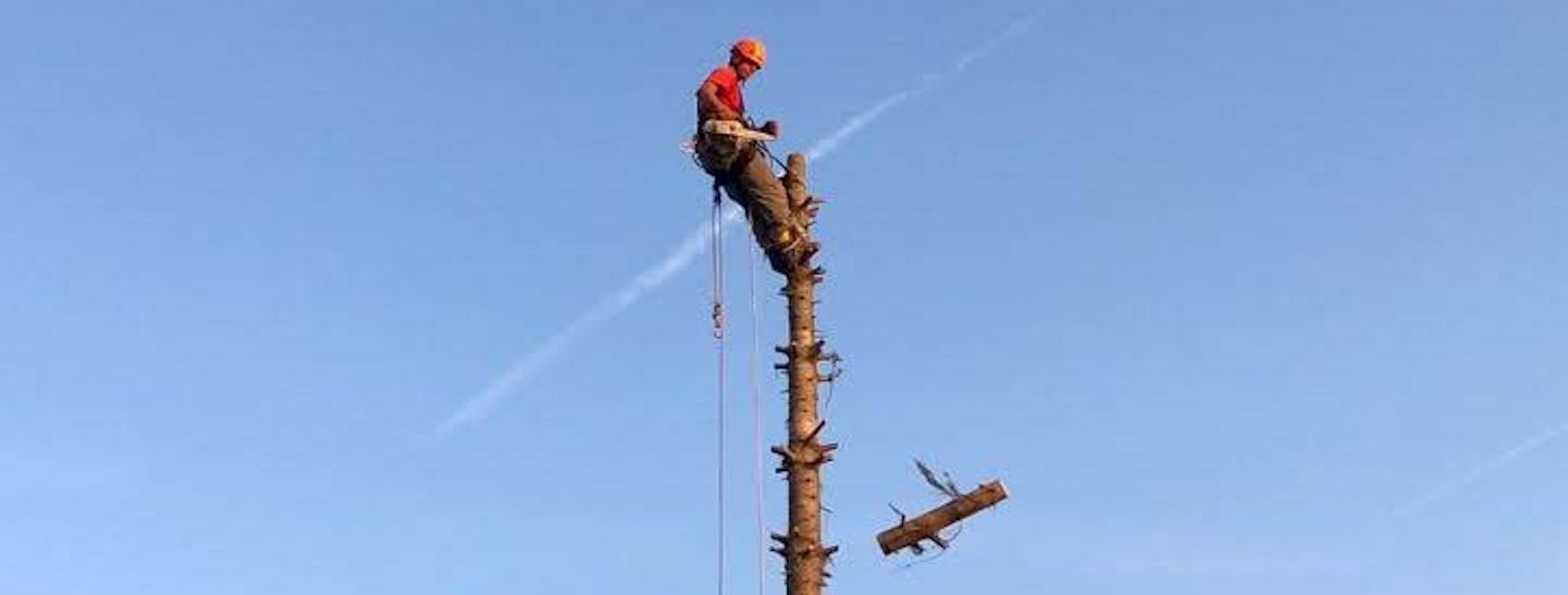 Fakivágás: veszélyes fák kivágása